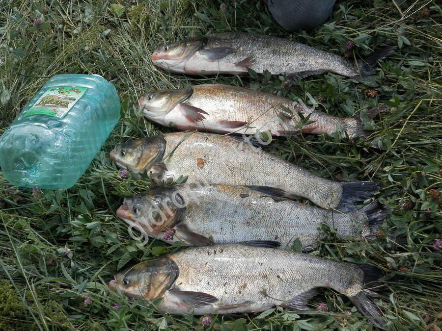 отзывы рыбаков о прикормке fishhungry